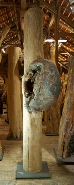"""Baumskulptur """"Körper mit Umwallung 9"""" / SKUL 126-9"""