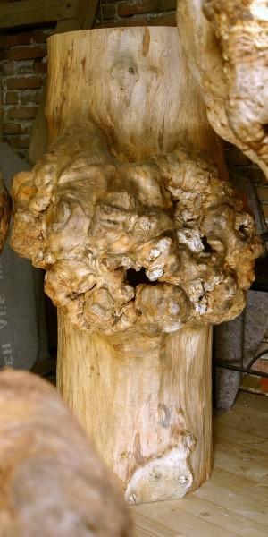 """Baumskulptur """"Körper mit Umwallung 6"""" / SKUL 126-6"""